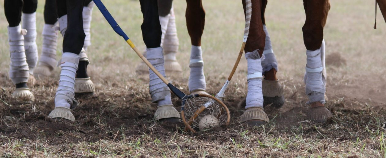 Polocrosse Association of South Australia